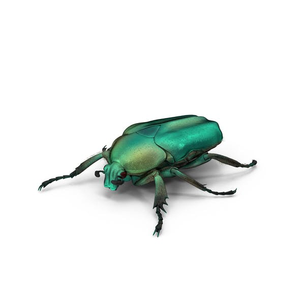 Cover Image for Green Scarab Beetle