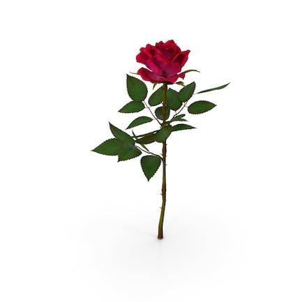 Rojo Rosa