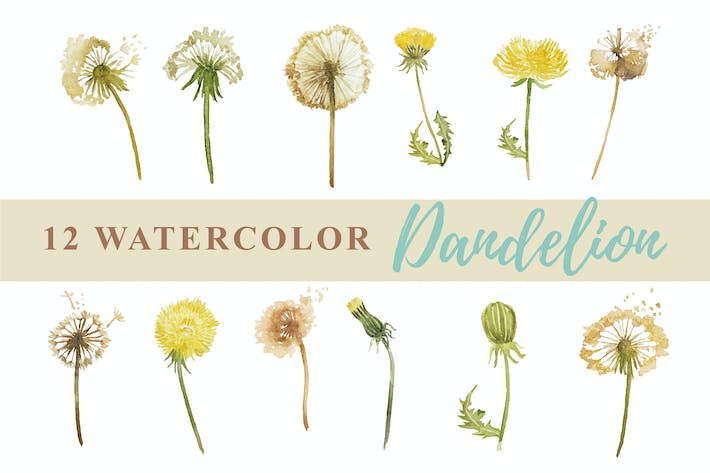 Thumbnail for 12 Watercolor Dandelion Illustration Graphics