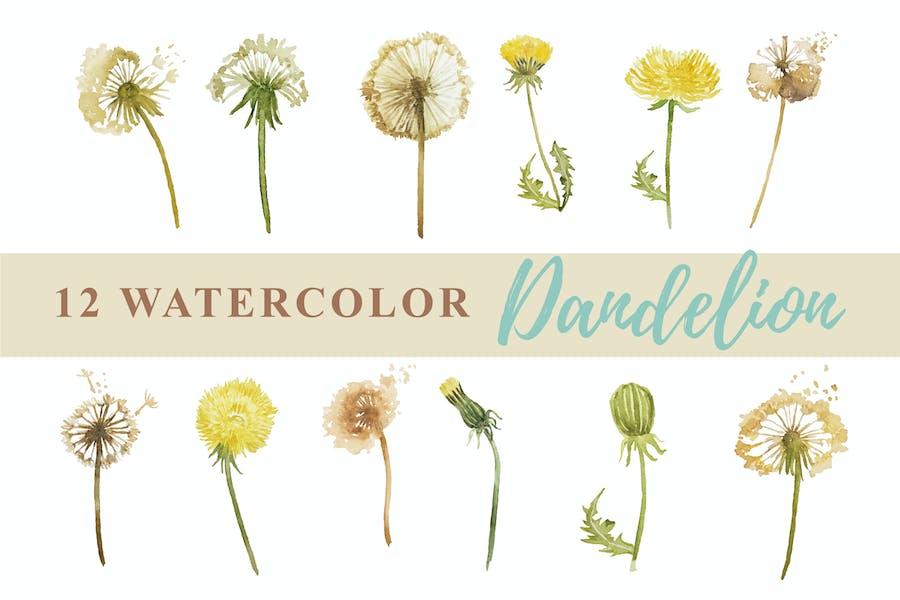 12 Watercolor Dandelion Illustration Graphics