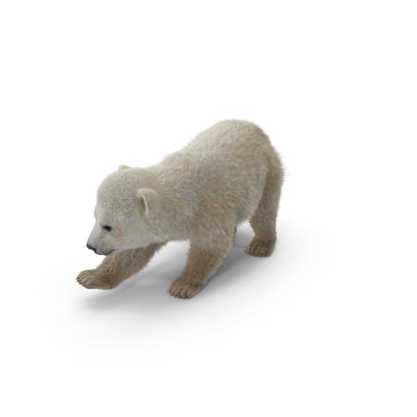 Cover Image for Baby Polar Bear