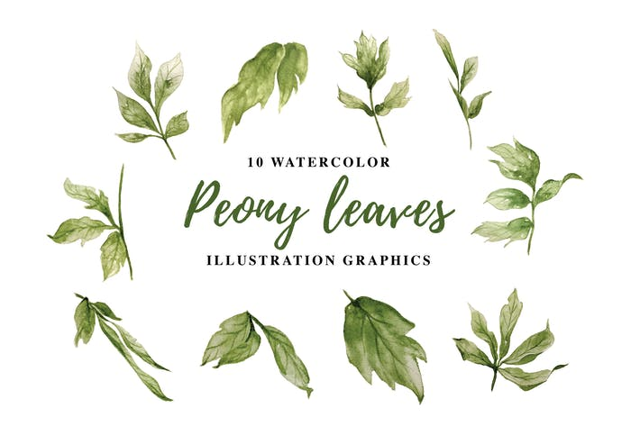 Thumbnail for 10 Watercolor Peony leaves Illustration Graphics