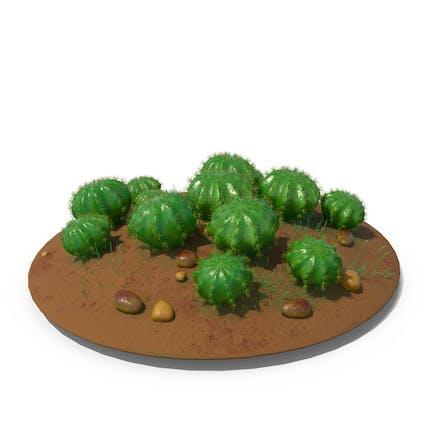 Cactus Barrel Ground Multi