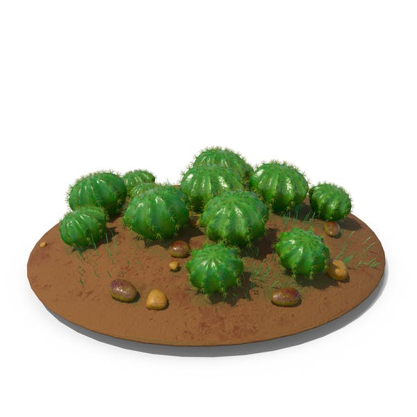 Cactus - Cactus - Suelo de barril