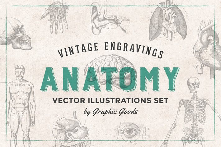 Thumbnail for Anatomy - Engraving Illustration Set