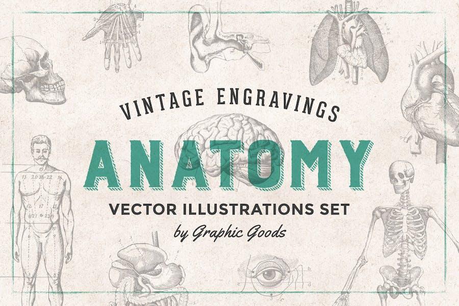 Anatomy - Engraving Illustration Set