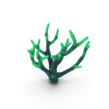 Korallengrün 1