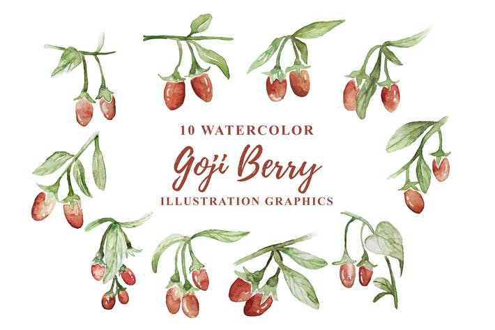 Thumbnail for 10 Watercolor Goji Berry Illustration Graphics