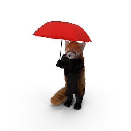 Roter Panda mit Regenschirm