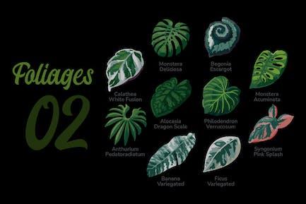 Foliages - Illustration Sets