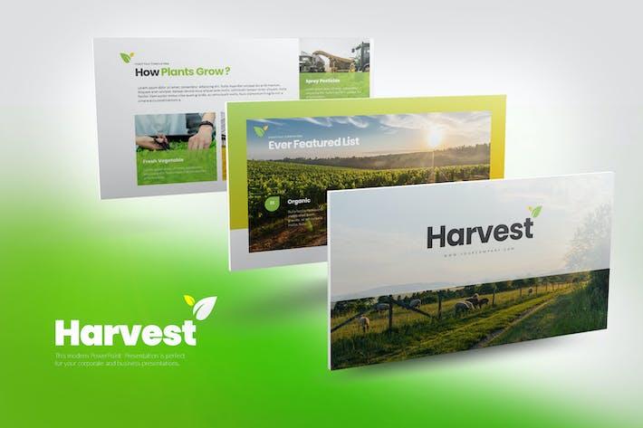 Урожай PowerPoint Презентация