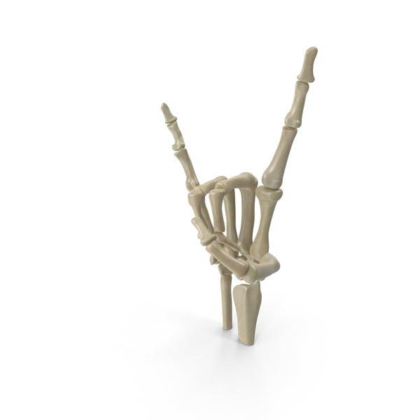 Posed Skeletal Hand