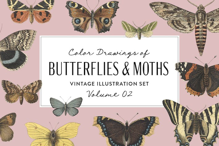 Thumbnail for Butterflies & Moths Vintage Graphics Vol. 2
