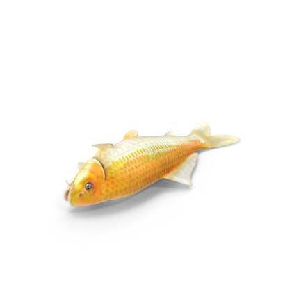 Pescado Koi Ogon Amarillo