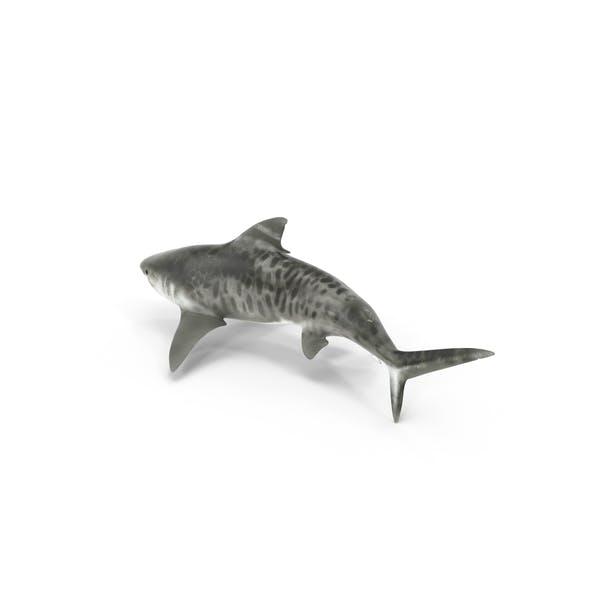 Thumbnail for Tiger Shark