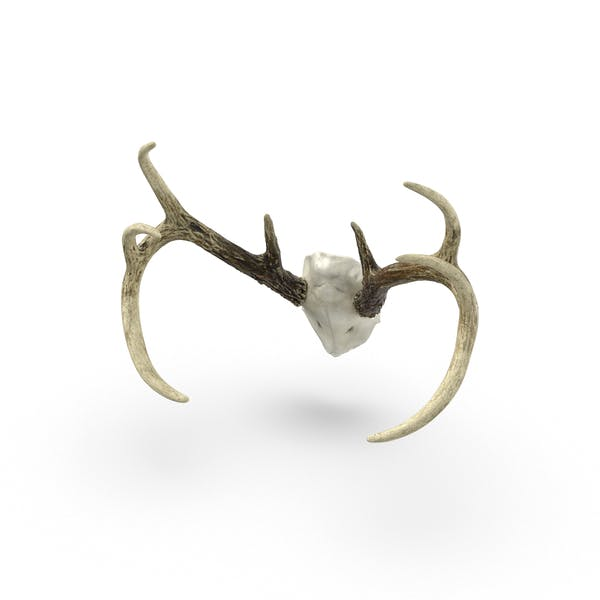 Thumbnail for Mounted Antlers