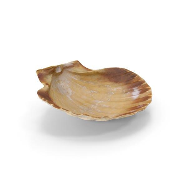 Thumbnail for Shell