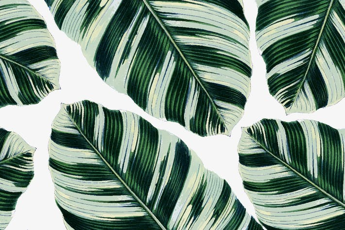 Cover Image For Tropical Foliage Pattern/Paper