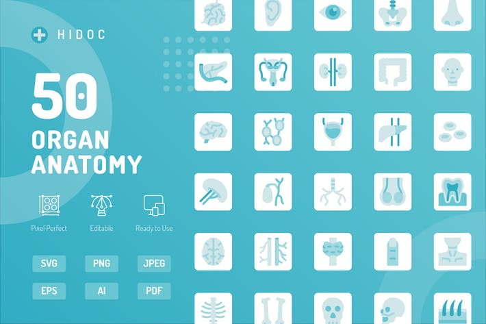 Hidoc - Organ Anatomy Icons