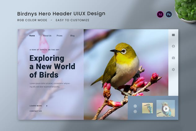Birdnys Hero Header