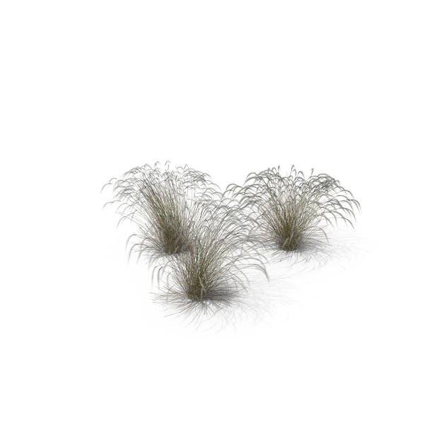 Stipa Grass