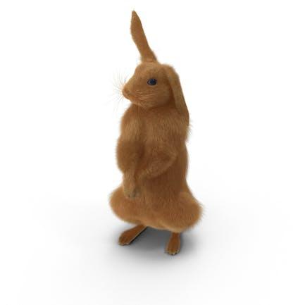 Rabbit Standing