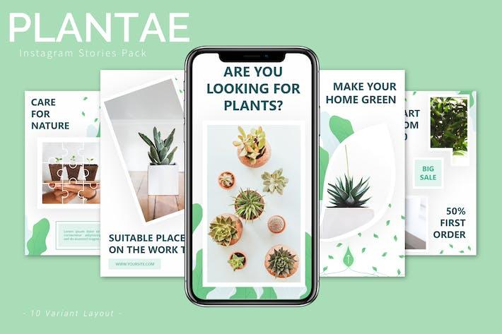 Thumbnail for Plantae - Instagram Story Pack