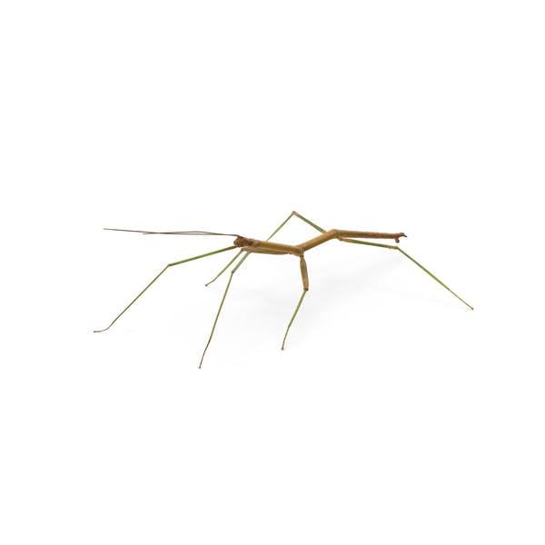 Cover Image for Stick Insect