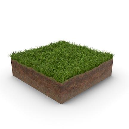 Grass Cross Section