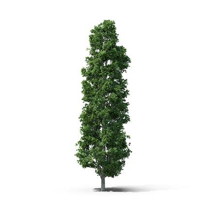 Grüner Blattbaum