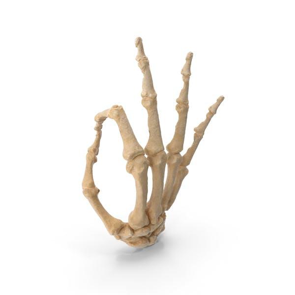 Skeletal Ok Sign