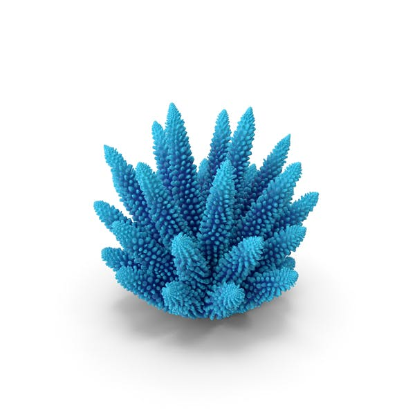 Coral 1 blue