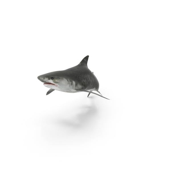 Thumbnail for Tiger Shark Attack