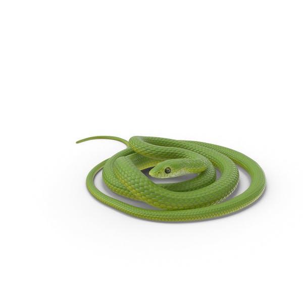 Grüne Schlange aufgewickelt