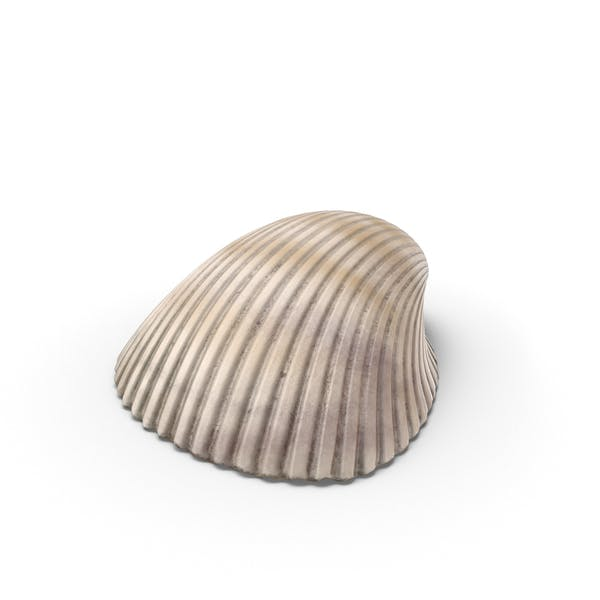 Thumbnail for Heart Cockle Shell