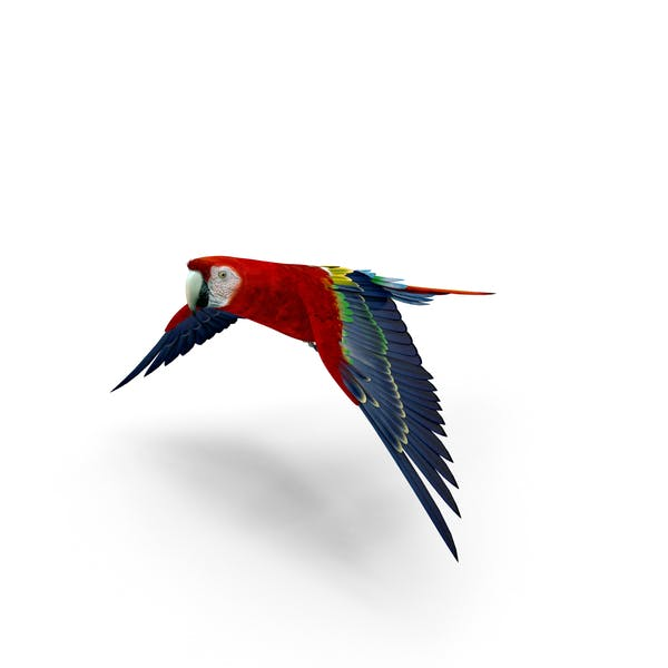 Thumbnail for Scarlet Macaw