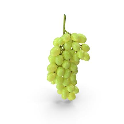 Clúster de Uvas Verdes
