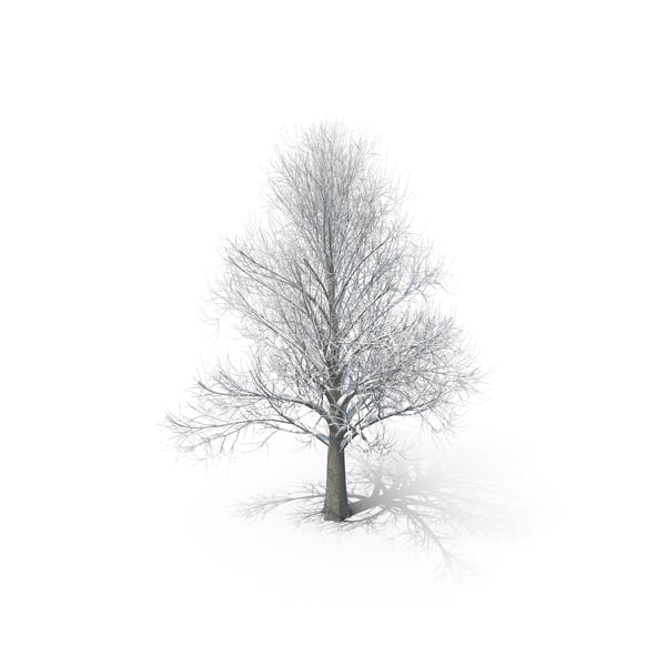 Thumbnail for Winter Tree with snow