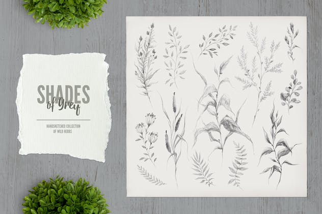 Shades of Grey. Collection of wild herbs // 3