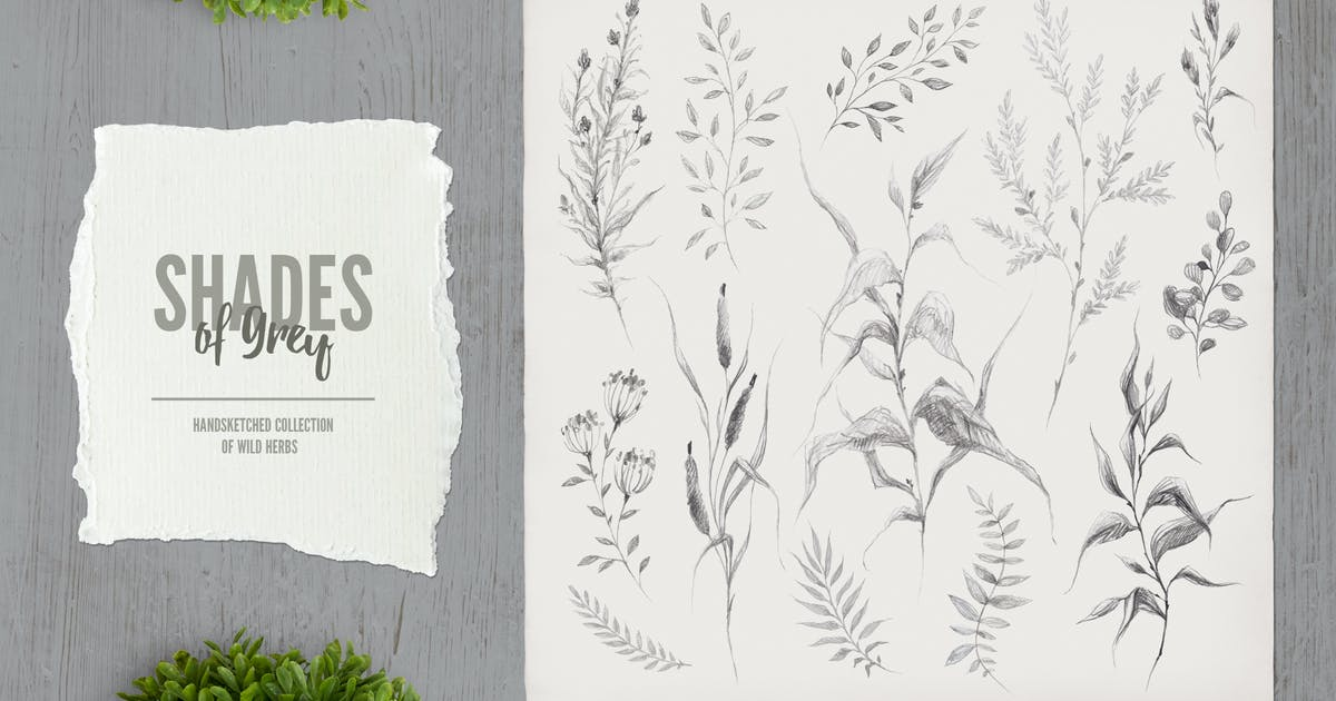 Download Shades of Grey. Collection of wild herbs // 3 by hellokisdottir