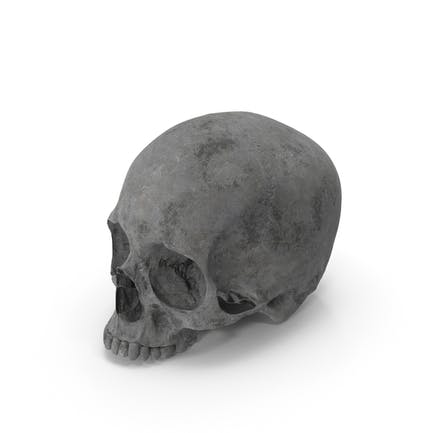 Concrete Skull No Jaw