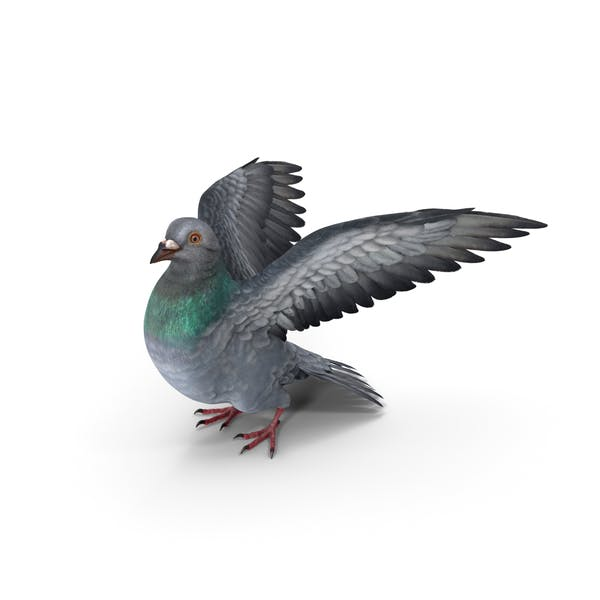 Cover Image for Pigeon