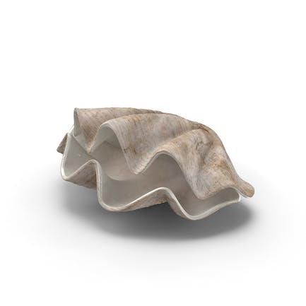 Conchas de Almeja