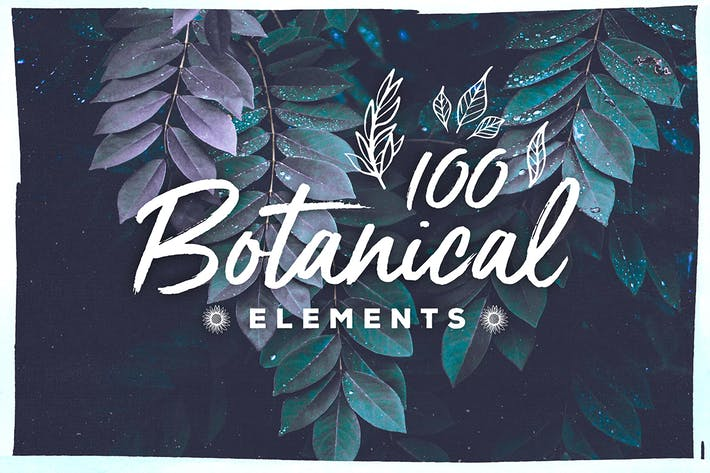 Thumbnail for 100 Handsketched Botanical Elements