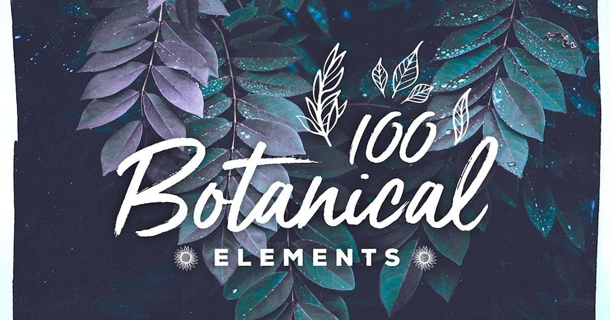 Download 100 Handsketched Botanical Elements by Layerform