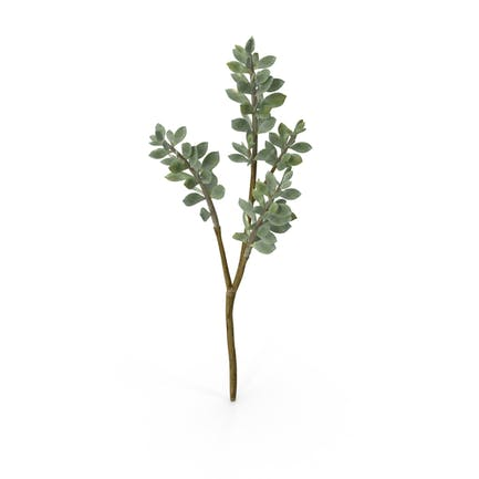 Faux Succulent Stem