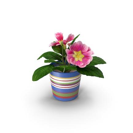 Blume im Topf