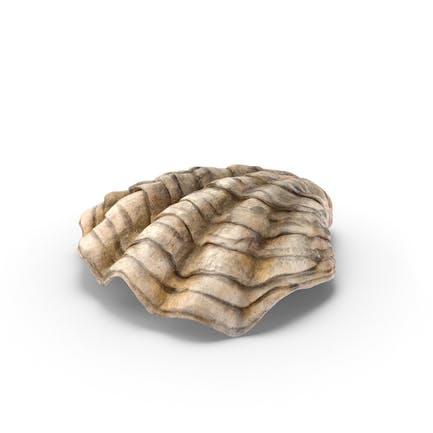 Concha de ostras