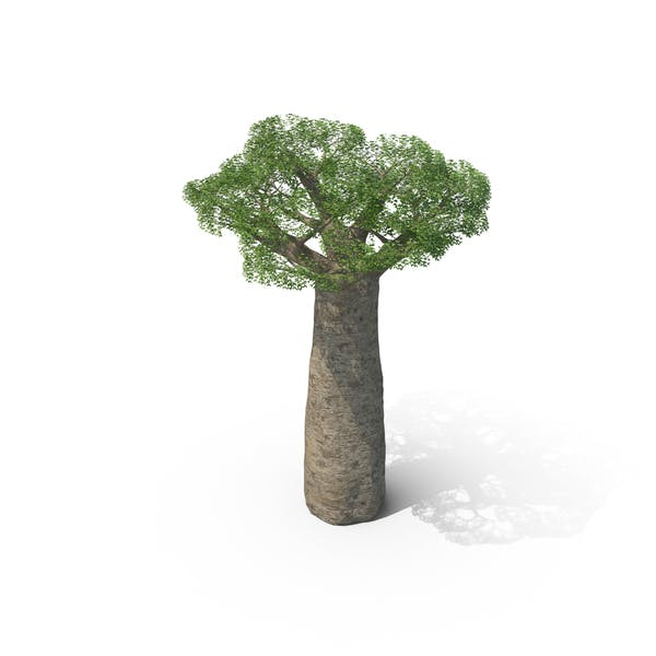 Cover Image for Baobab Tree