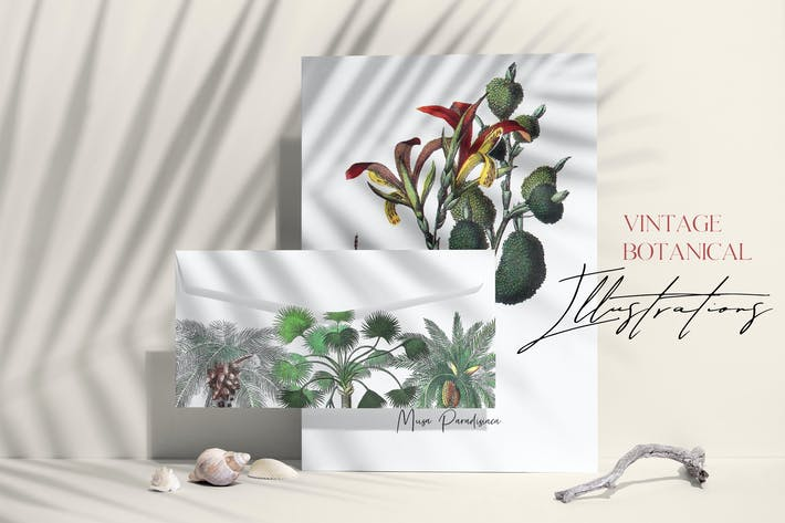 Thumbnail for Vintage palms - tropical illustrations set